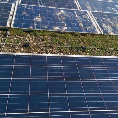 zonnepanelen reinigen tijdens